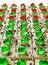 Free Isolates Of Cake Squares. Royalty Free Stock Photo - 28618615