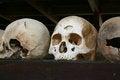 Free Skulls - Killing Fields, Cambodia Royalty Free Stock Images - 28623239