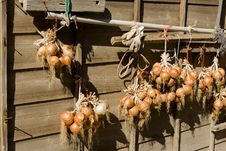 Free Onions In The Sun Stock Photography - 28621762