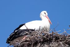 Free Stork In The Nest Royalty Free Stock Photos - 28627158