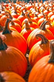 Free Pumpkins On Pumpkin Patch Royalty Free Stock Images - 28629209