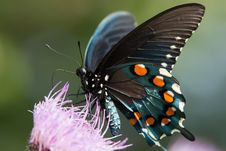 Free Butterfly Stock Photo - 28629470