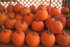 Free Pumpkins On Pumpkin Patch Royalty Free Stock Photography - 28629637