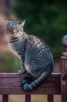 Free The Gray Cat On A Fence Stock Image - 28629881