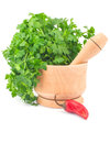 Free Parsley In Mortar And Chili Pepper Stock Photo - 28633440