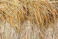 Free Dry Paddy Rice Stock Photo - 28639920