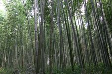 Free Bamboo Forest Stock Photo - 28638990