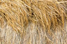 Free Dry Paddy Rice Stock Photo - 28639920