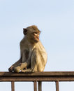 Free Monkey  In The Cage Royalty Free Stock Photo - 28641365