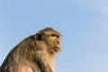 Free Monkey In Thailand Stock Image - 28641431