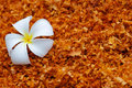 Free White Flower On The Sawdust Stock Photos - 28641703