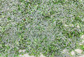 Free Silkworm Stock Image - 28644381