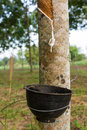 Free Tapping Latex From Rubber Tree Royalty Free Stock Image - 28644546