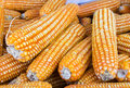 Free Yellow Dried Corn Stock Photography - 28644872