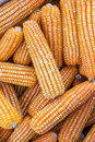 Free Yellow Dried Corn Stock Image - 28644961