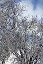 Free Heavy Snow Royalty Free Stock Photo - 28648185