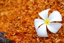 Free White Flower On The Sawdust Royalty Free Stock Image - 28641786