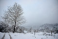 Free Views Of Snow-covered Tree Royalty Free Stock Images - 28655839