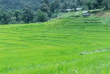 Free Green Rice Field In Thailand Stock Photo - 28650860