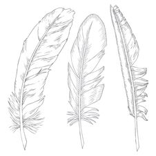 Free Feathers Illustration Stock Photography - 28653932