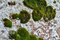 Free Rocks And Lichen. Stock Image - 28668731