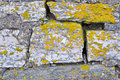 Free Rocks And Lichen. Royalty Free Stock Images - 28668789