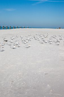 Free Terns On Beach Royalty Free Stock Images - 28668089