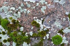 Free Rocks And Lichen. Stock Images - 28668744