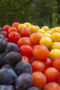 Free Plums Stock Image - 28674521