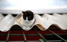 Free Cat On A Roof Stock Photo - 28670170