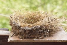 Swallow Nest Royalty Free Stock Images