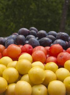 Free Plums Stock Photo - 28674700