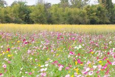Free Beautiful Flowers In The Meadow Stock Photo - 28677430