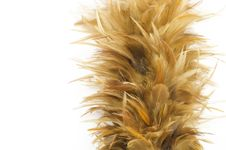 Free Feather Broom Royalty Free Stock Image - 28679136