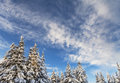 Free Snowy Trees With Blue Sky Royalty Free Stock Images - 28687719