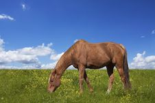 Free Horse Grazing On Green Field Stock Photos - 28682763