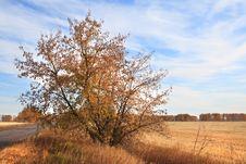 Free Autumn Landscape Stock Images - 28687424