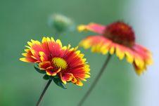 Free Unusual Flower Royalty Free Stock Photo - 28687885