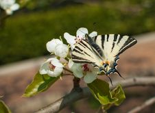 Free Butterfly On A Flower Royalty Free Stock Photos - 28691428