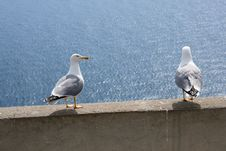 Free Seagull Royalty Free Stock Photography - 28694057