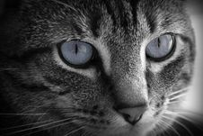 Free Big Beautiful Gray Eyes Royalty Free Stock Images - 2870329