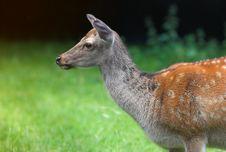 Free Deer Stock Image - 2871531