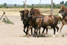 Free Horse Royalty Free Stock Photos - 2872418