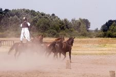 Free Horse Royalty Free Stock Photos - 2872458