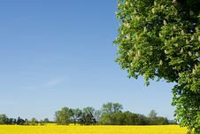 Free Spring In Europe Royalty Free Stock Photo - 2879735