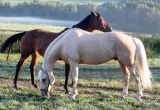 Free Horses Out At Grass Royalty Free Stock Image - 2879956