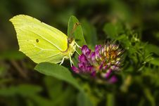 Free Portrait Of A Butterfly Royalty Free Stock Photo - 28700795
