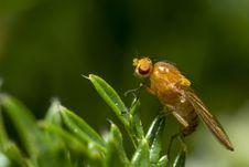 Free Portrait Of A Fly Stock Photography - 28700952