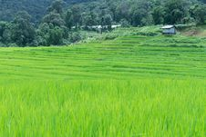 Free Green Rice Field In Thailand Royalty Free Stock Images - 28708779