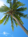 Free Palm Tree From Below Stock Images - 28719244